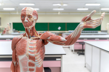 Course Image Anatomy and Physiology